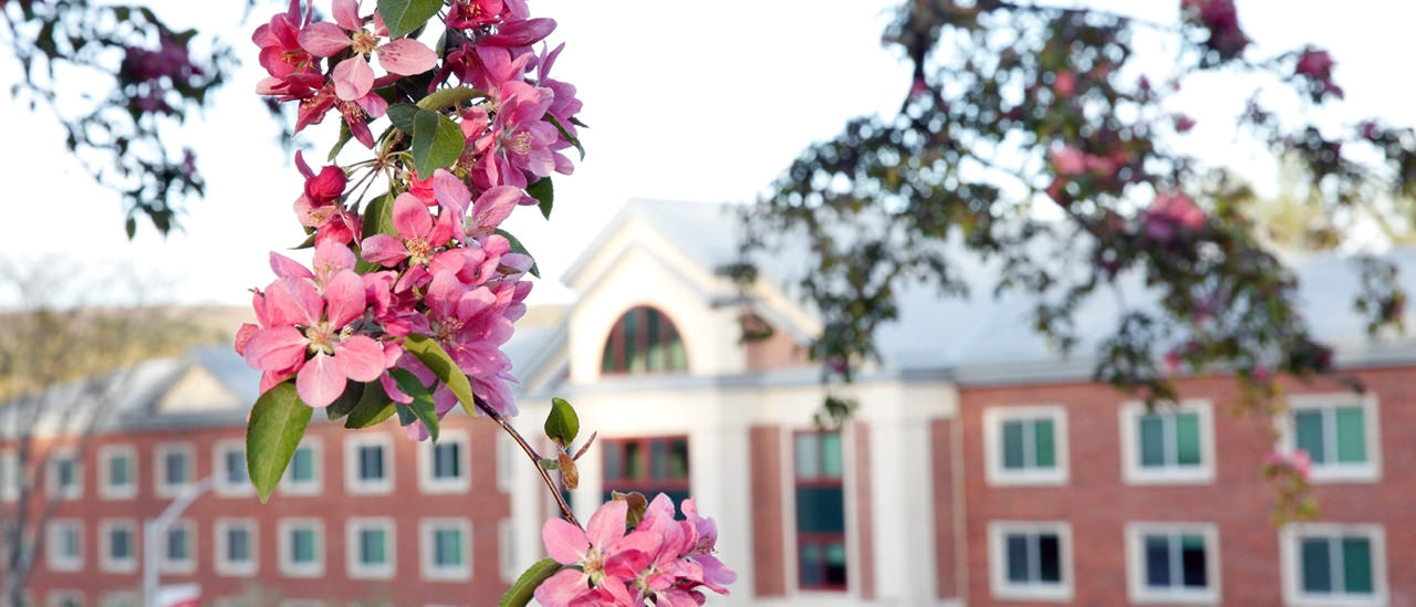 Flowers blooming in front of one of the residence halls.