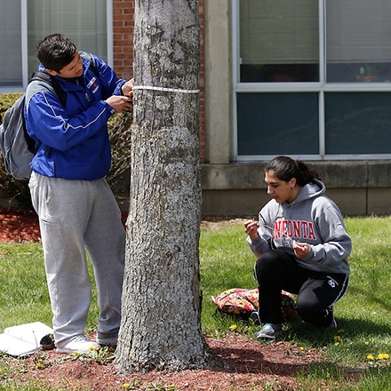 Biology students identify campus tree species and record their diameter at breast height as part of a campus tree mapping project.
