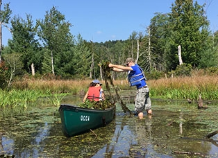 Students using a canoe in a swamp.