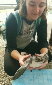 Student looking at the shell of a sea turtle in Japan.