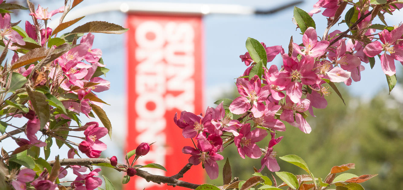 Blossoming cherry tree in front of the SUNY Oneonta banner.