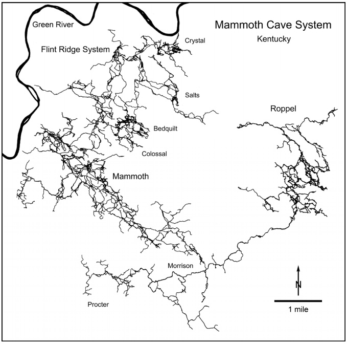 "Figure 2: Map of major passages in Mammoth Cave. At this scale the passages appear only as wiggly lines. Many passages cross each other at various levels. The complexity of the cave is barely suggested in this simplified map. The names (e.g. Roppel) refer to different sections that were explored independently and later connected by further discoveries. The part labeled ""Mammoth"" includes the tour routes open to the public. Mapped by the Cave Research Foundation and the Central Kentucky Karst Coalition."